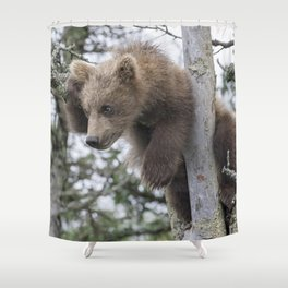 Baby Grizzly Bear (Cub) in Tree Shower Curtain