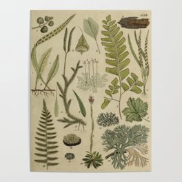 Ferns And Mosses Poster