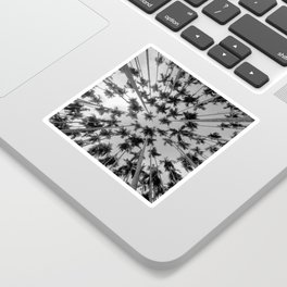 Above Palm Trees (Black and White) Sticker
