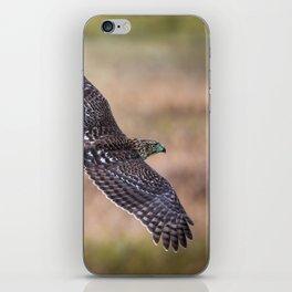 Cooper's Hawk In Flight iPhone Skin