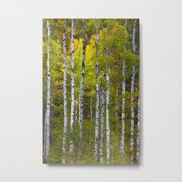 Aspen Tree Wall Art, Aspen Tree Decor, Birch Tree Art, Aspen Art, Metal Aspen Tree Wall Art, Metal Print