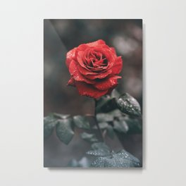 ROSE - WET - DEW - WATER Metal Print