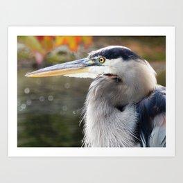 Heron expression Art Print