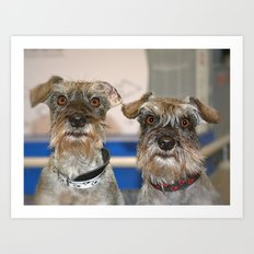 funny Dogs Art Print
