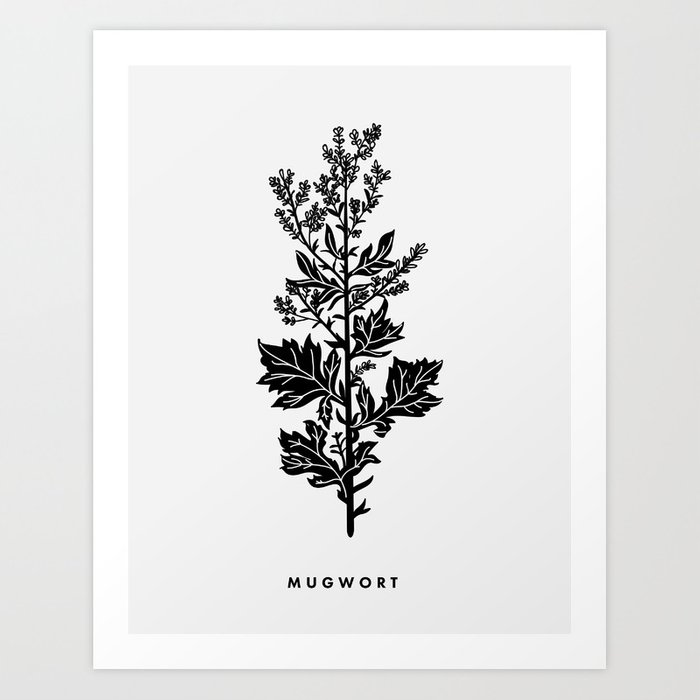 Mugwort Botanical Art Print