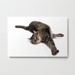 Adorable Tabby Cat Stretching Metal Print