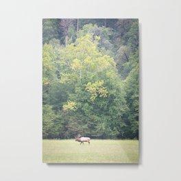 """""""Elk Bull - Cataloochie Valley"""" Metal Print"""