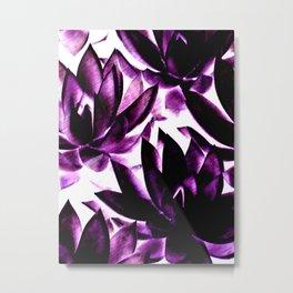 Echeverias in Purple Metal Print