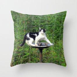 Cat Akimbo Bird Bath Throw Pillow