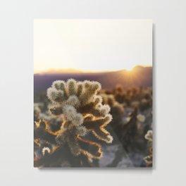 Daybreak at the Cholla Cactus Garden Metal Print