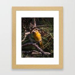 Morning Oriole Framed Art Print