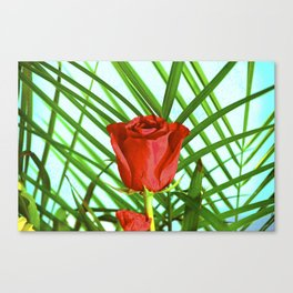 rose of memory Canvas Print