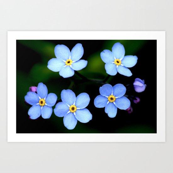 Tiny Blue Flowers Art Print