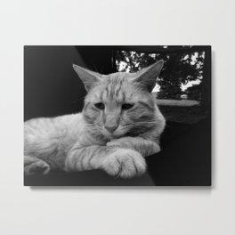 Comfortable Cat Metal Print