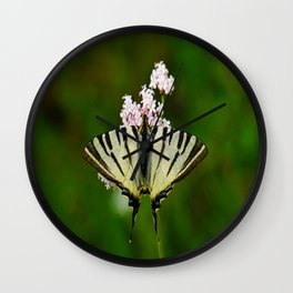 Scarce Swallowtail On Wild Garlic Flowers Wall Clock