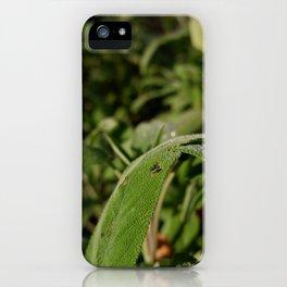 Garden in sunshine iPhone Case