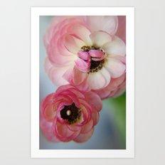 Pink Ranunculus Flower Art Print