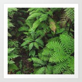 New Zealand ferns Art Print