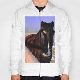 Mahogany Bay Draft Horse Hoody