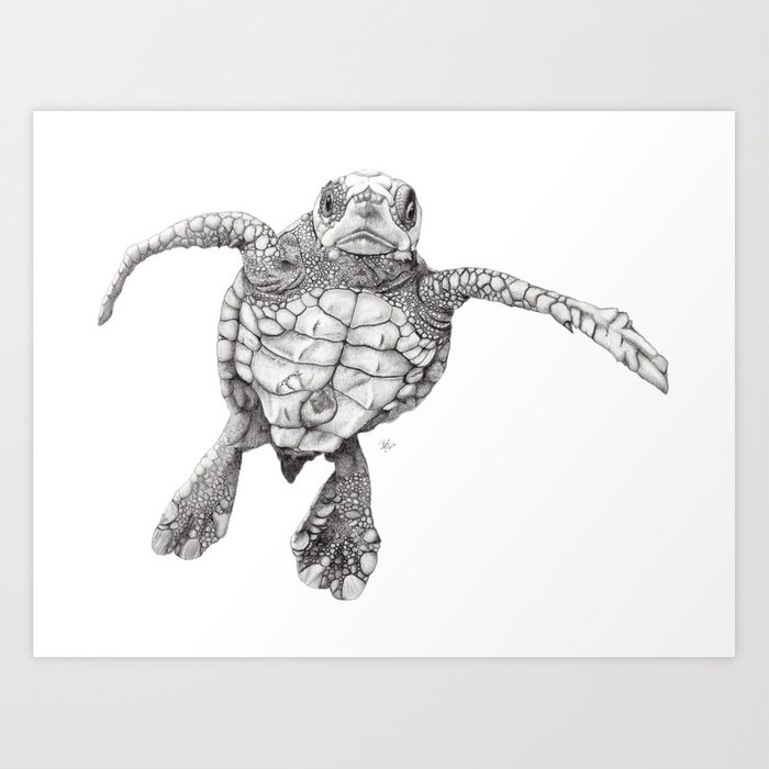 Chelonioidea (the turtle) Art Print