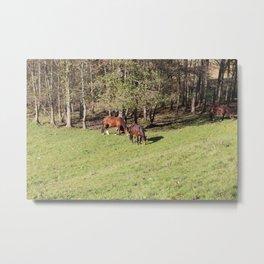 Three Horses on one Nature Metal Print