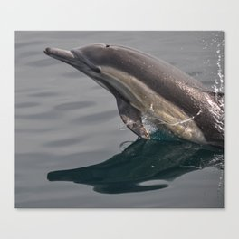 Leaping Dolphin Canvas Print