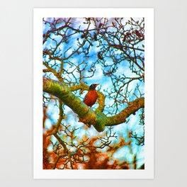 Robin Red Art Print
