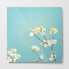 Aqua Dogwood Flower Photography, Teal Turquoise Floral Branches Metal Print
