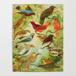 Amazonian Birds by Göldi & Emil August Belem Brazil Colorful Tropical Birds Scientific Illustration Poster