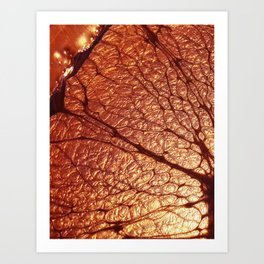 CooperCola Art Print