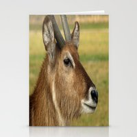 elk Stationery Cards featuring Elk by Raymond Earley