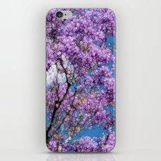 Jacaranda Tree iPhone & iPod Skin