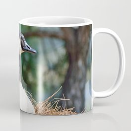 Nesting Canadian Goose Coffee Mug