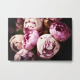 Pink Bourbon Roses Metal Print