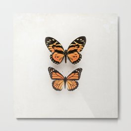 Two Orange Butterflies Metal Print