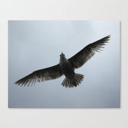 Gotta fly now Canvas Print