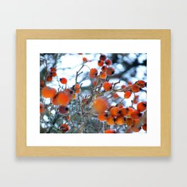 Winterbeeren Framed Art Print