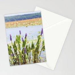 Florida Beauty 5 Stationery Cards