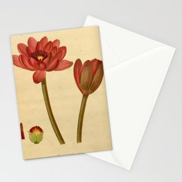 Flower castalia magnifica Stationery Cards