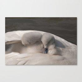 Snuggled Down Canvas Print