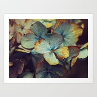 Hydrangea Dream - Blue & Gold Art Print
