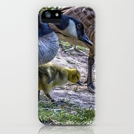 Taking Care of Goslings iPhone Case