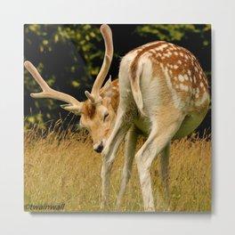 Wild Fallow Deer Metal Print
