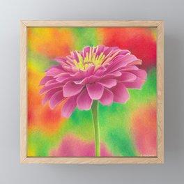 Zinnia flower colored pencil drawing Framed Mini Art Print