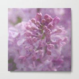 Lilac / Syringa Metal Print