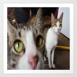Back Yard Kitties  Art Print