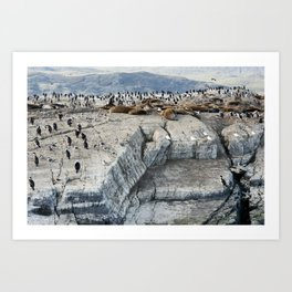 Colony of King Cormorants and Sea Lions on Ilha dos Passaros located on the Beagle Channel, Tierra D Art Print