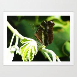 Butterfly 7 Art Print