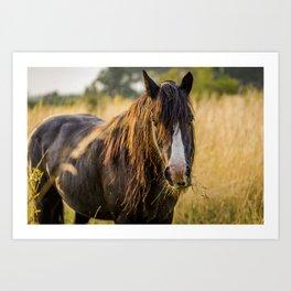 Autumn Horse Art Print