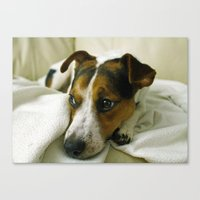 jack russell Canvas Prints featuring jack russell by Brmbrmba27